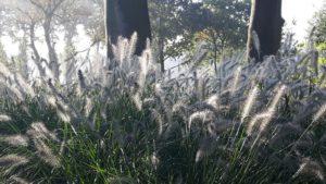 rustgevende natuur in Garderen